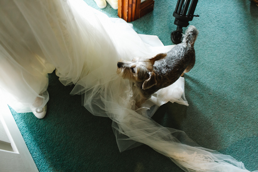 dog, bride, dress